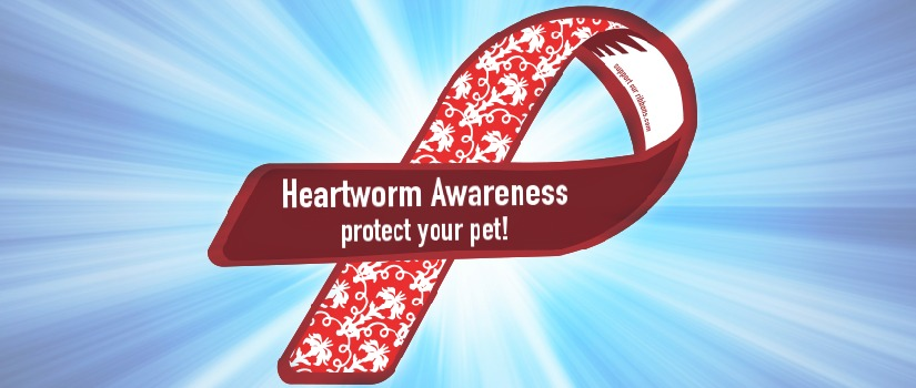 What Is Heartworm Banner